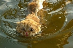 cropped-cat-swim10.jpg